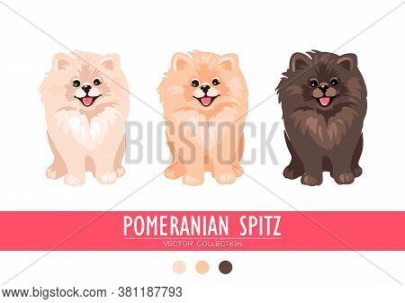 Pomeranian Spitz Cream, Orange And Dark Isolated On White Background. Cute Poms Puppies. Small Germa