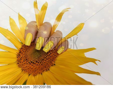 Fashionable Manicure In Pastel Color On Women Is Nails With Sunflower.