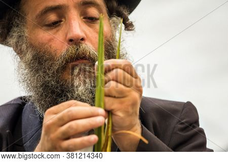 JERUSALEM, ISRAEL - SEPTEMBER 20, 2018: Religious Jew in a black hat carefully chooses a lulav. Preparing for the Sukkot Autumn Harvest holiday.  The concept of ethnographic and photo tourism