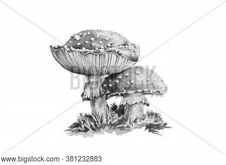 Amanita Muscaria Black And White Graphic Watercolor Illustration. Close Up Forest Toxic Mushroom Ima