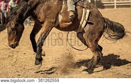 Cowboy Riding A Bucking Bronc Horse In A Country Rodeo Event