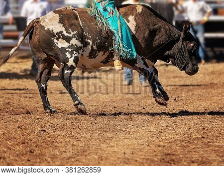 A Cowboy Competing In The Bull Riding Competition At A Country Rodeo