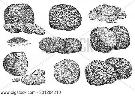 Truffle Mushroom. Expensive Delicatessen Mushroom Whole, Sliced, Half And Seed Grain Illustration. H