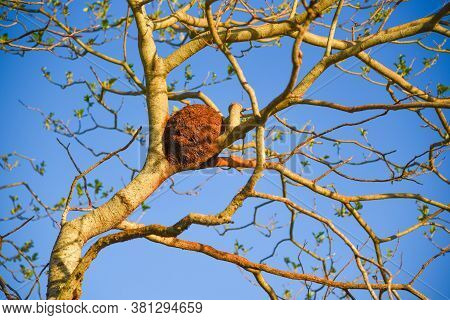 Tree Branches And Furnárius Rufus Bird House With Blue Skies In The Background