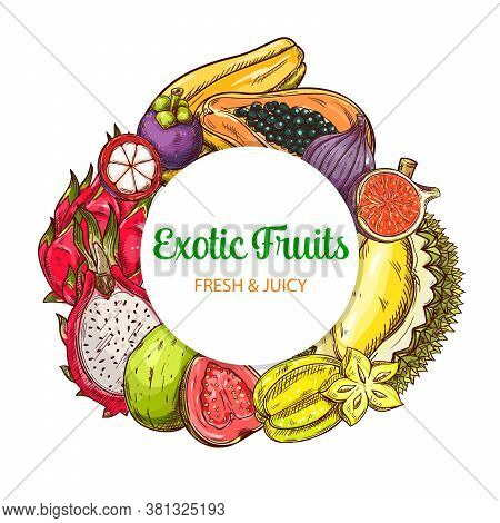 Tropical Fruits Vector Round Banner, Isolated Frame With Sketch Carambola, Guava, Lychee And Pitahay
