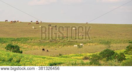 Livestock Fields. Pampa Biome. Border Of Brazil And Uruguay. Area Of Agricultural Production And Bee