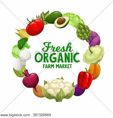 Vegetables Frame, Food Farm Market Veggies, Vector Banner Of Natural Organic Green Cabbage, Avocado
