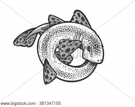 Shark Catshark Rolled In Circle Ring Sketch Engraving Vector Illustration. T-shirt Apparel Print Des