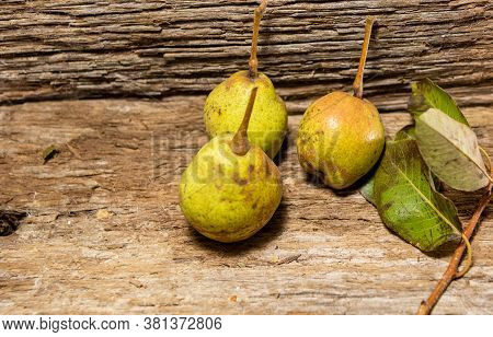 Freshly Picked Pear Fruits (pyrus Communis L) On Wooden Background