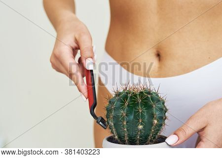 A Woman Shaves A Cactus With A Razor Against The Background Of Her Panties. Concept Of Woman Female