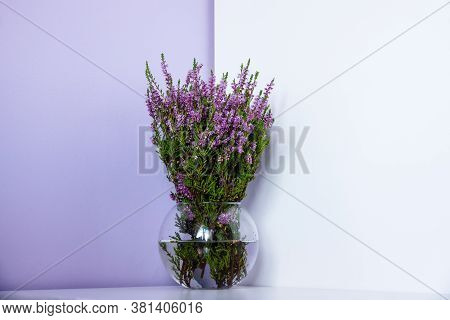Erica Carnea Winter Heath, Winter-flowering Heather, Spring Alpine Heath Pink Flowers. Flowering Eri