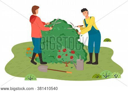 Gardeners Man In Coveralls Cut The Bush With Clippers. Blooming Red Rose Bushes, Watering Can, Garde