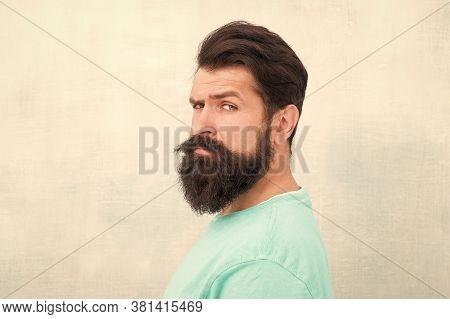 Masculinity Concept. Man Bearded Hipster Stylish Beard Grey Background. Stylish Beard And Mustache C