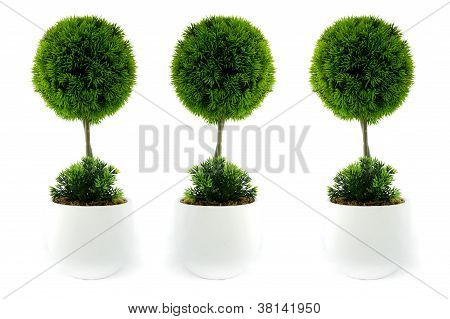 Three mini trees