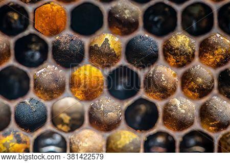 Macro Honey Bee Beehive Wax Frame Filled With Pollen Flower Powder Food Closeup