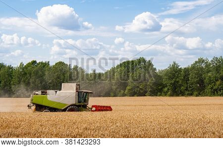 Modern Combine Harvester Harvests Ripe Wheat In Field, Against Of Trees And Blue Sky With Clouds. Pr