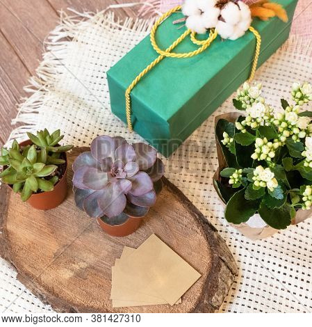 Kalanchoe, Widow's-thrill, Succulent And Gift Box Close Up View
