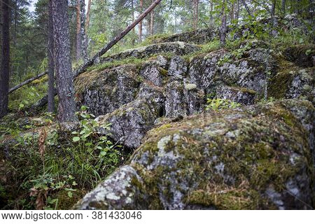 Green Moss Background In Nature. Bright Green Moss And Lichen In Pine Forest. Selective Focus