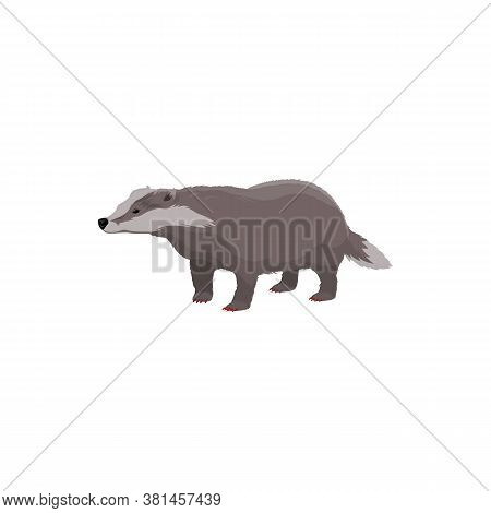 European Badger Isolated Wildlife Animal. Vector Short-legged Omnivore, Forest Cartoon Character