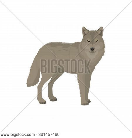 Gray Wolf Isolated Forest Animal Profile View. Vector Wild Dog, Polar Or Siberian Wolf Beast
