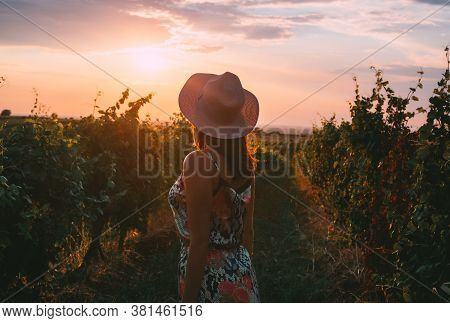 Beautiful Woman In Vineyard In Nature. Happy People Lifestyle. Woman In Vineyard In Sunset. Nature L