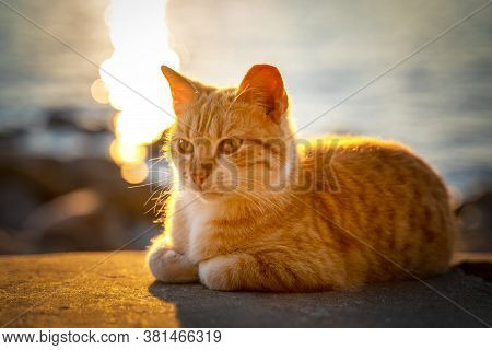Cute Red Street Cat Lies On Concrete Parapet And Basks In Golden Rays Of Setting Sun, Blurred Backgr