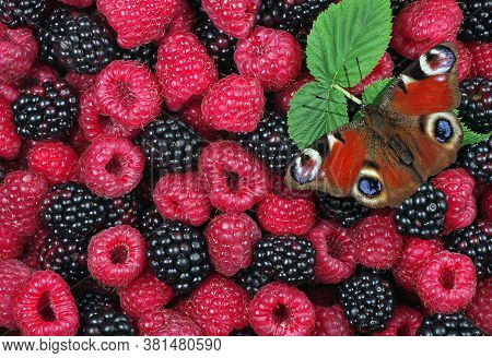 Bright Red Butterfly On Forest Berries. Ripe Raspberries And Blackberries Texture Background. Summer