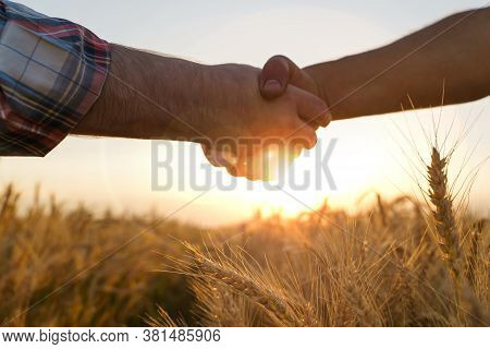 Two Farmers Shake Hands Against The Background Of A Wheat Field. Conclusion Of A Contract.