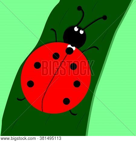 Ladybug Vector Illustration. Comic Character. Colorful A Biological Bug. A Funny Insect, A Seasonal