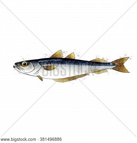 Blue Witing, Watercolor Isolated Illustration Of A Fish.