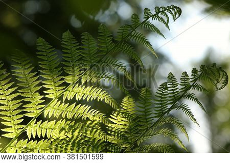 Fern forest spring Nature background Close-up Nature green leaf Nature background morning Nature background Macro Nature background sun Nature background lush fresh Nature background outdoors springtime Nature background Nature background.