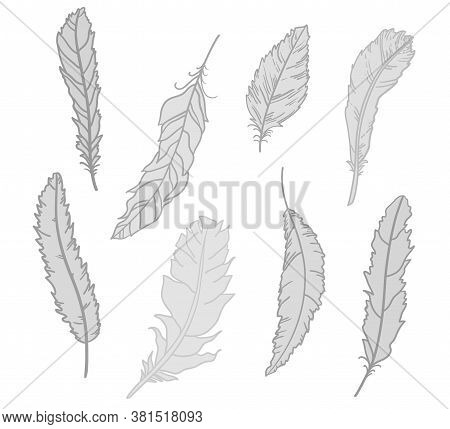 Monochrome Feather. Hand Drawn Feathers On Isolated White Background