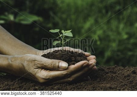 Hand Holding A Green And Small Plant. Green Fresh Plants On Nature Background.