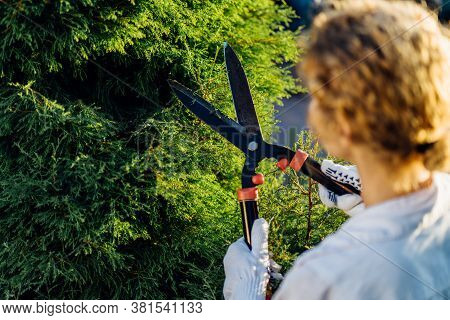 Blond Young Woman Cutting Trimming Hedge Doing Garden Work. Female Gardener Pruning Shears In Hand.