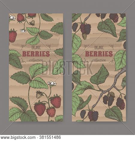 Two Labels With Garden Strawberry Aka Fragaria Ananassa And Black Mulberry Aka Morus Branch Color Sk