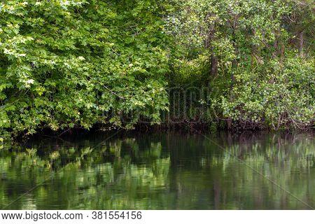 Green River Bank, Beautiful Calm Natural Landscape