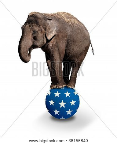 Domesticated Asian Elephant balancing on a Circus ball. poster