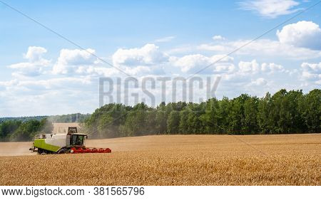Combine Harvester In Distance Harvests Ripe Wheat, Rye In Field, Against Of Trees And Blue Sky With