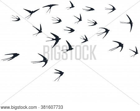 Flying Swallow Birds Silhouettes Vector Illustration. Migratory Martlets Bevy Isolated On White. Ala