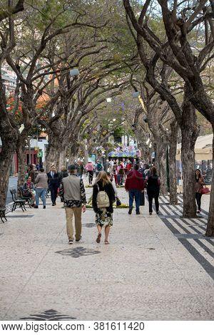 Funchal, Madeira, Portugal - April, 19, 2018: Jacaranda Trees Along Avenida Arriaga One Of The Favor