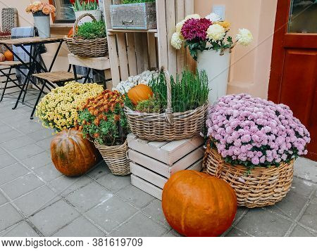 Pumpkins And Autumn Flowers In Baskets On Wooden Boxes, Rustic Modern Decor Of City Street In Fall.