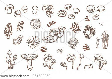 Mushrooms Hand-drawn Vector Clipart With Edible And Poisonous Mushrooms, Spores, Garden Gnome, And O