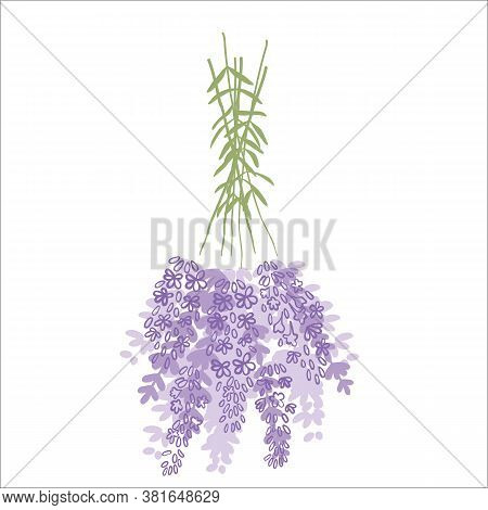 Fresh Cut Fragrant Lavender Plant Flowers Bunch And Single, Realistic Icons Set Isolated Vector Illu