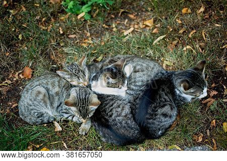 Kittens Sleep On The Grass, And Warm Each Other. Family Warmth And Cosiness.