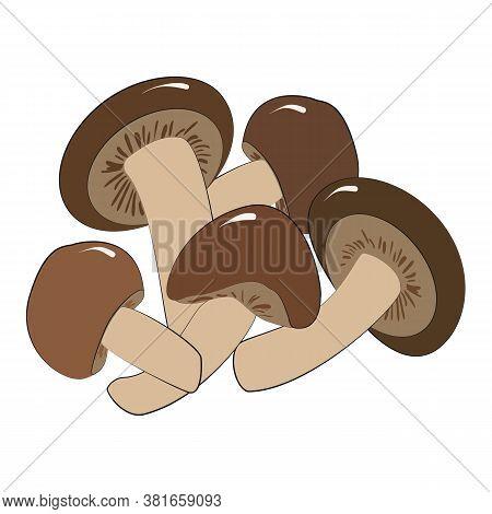 Enoki Or Shiitake Mushrooms Are Edible Japanese Mushrooms-an Ingredient For Ramen Noodle Soup. Vecto