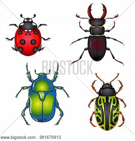 Vector Illustration With Insect Beetles. Set Isolated On White Background. Ladybird, Beetle Deer, Gr