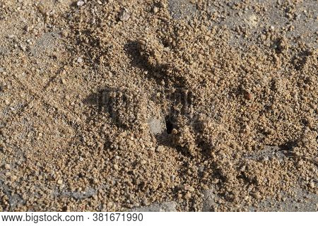 Dug Between The Road Tiles Is Included In The Anthill