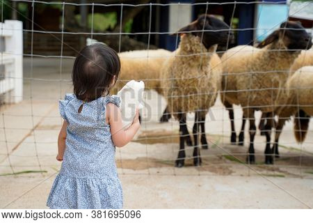Back View Of Little Baby Girl Traveler Concentrate Looks To Sheeps In Farm.baby Hold The Doll And St