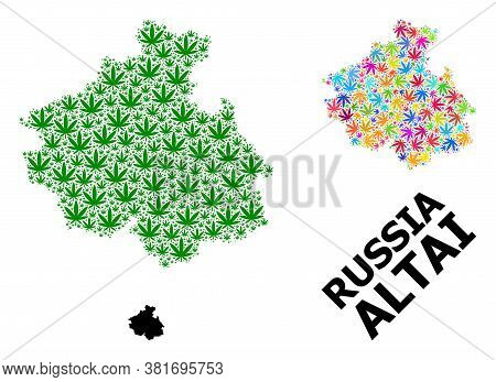 Vector Marijuana Mosaic And Solid Map Of Altai Republic. Map Of Altai Republic Vector Mosaic For Mar