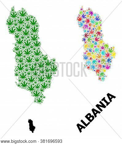 Vector Hemp Mosaic And Solid Map Of Albania. Map Of Albania Vector Mosaic For Marijuana Legalize Cam